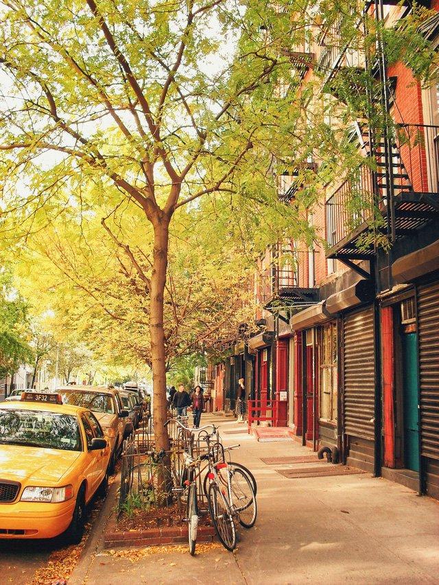 thu vang new york 1